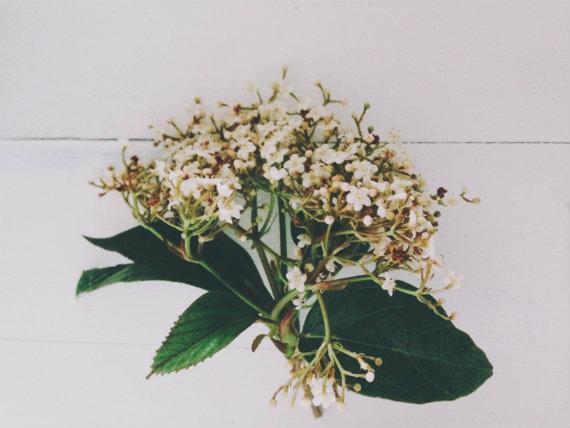 Flower2570