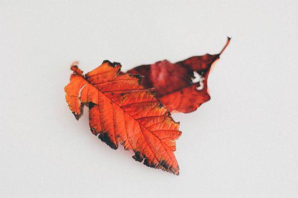 Teatowel and leaves (1 of 3) 1202