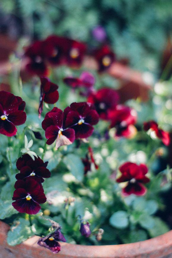 Garden (2 of 3) 1200