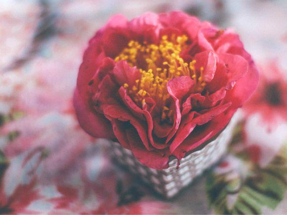 Cup camellia floral tablecloth