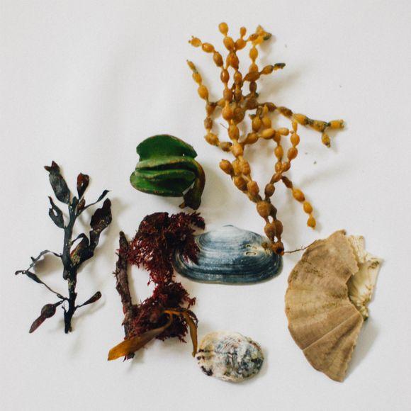 Seaweed 2 (1 of 10) 1200
