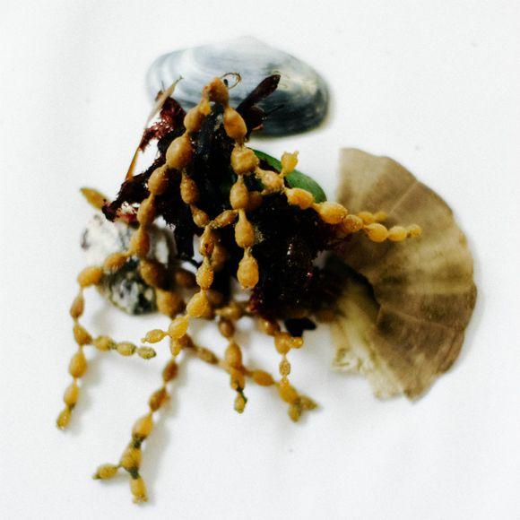 Seaweed 3
