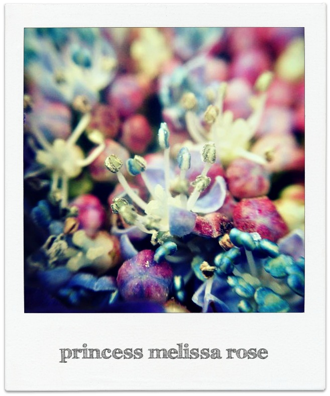 Blue lace-cap princess melissa rose