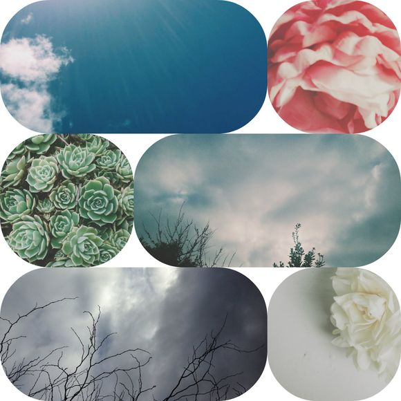 Collage sky flowers