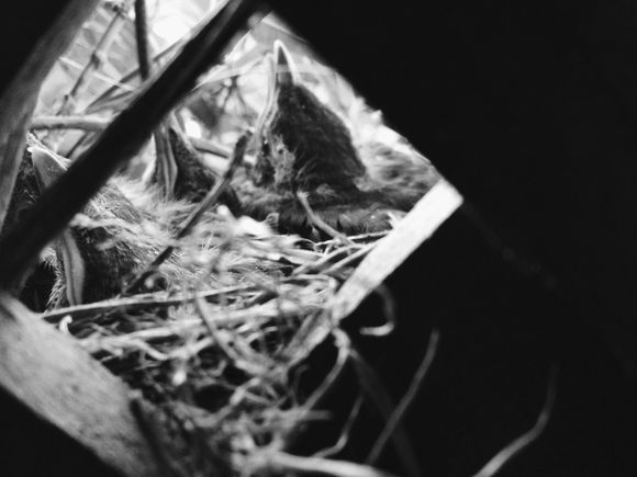 000001 nest 2